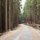 Idealtypische Betrachtung von Wald und Wildniss